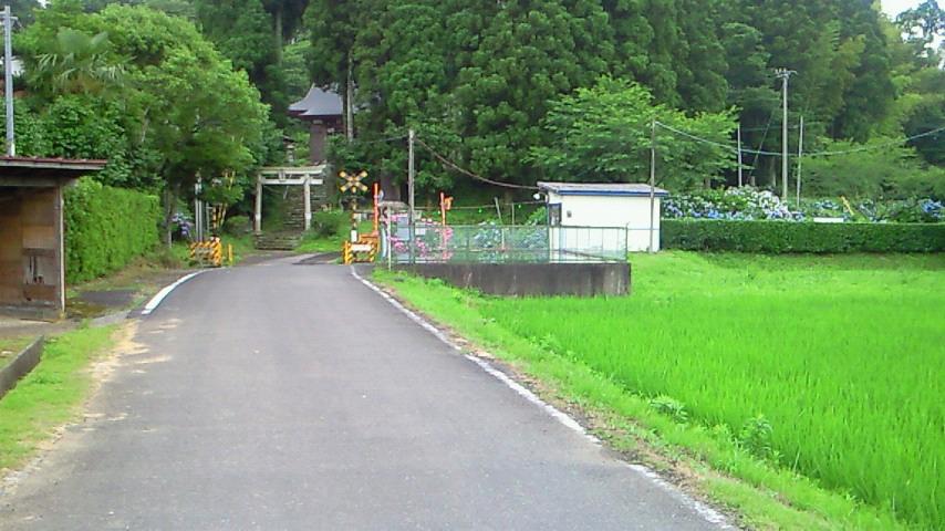 たくさんの紫陽花o(^-^)o